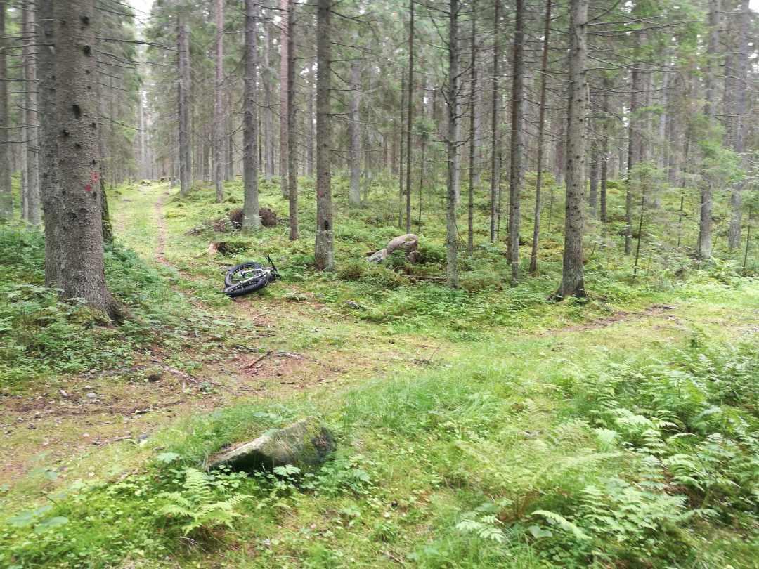 Reitti Lassila, kaunis metsä