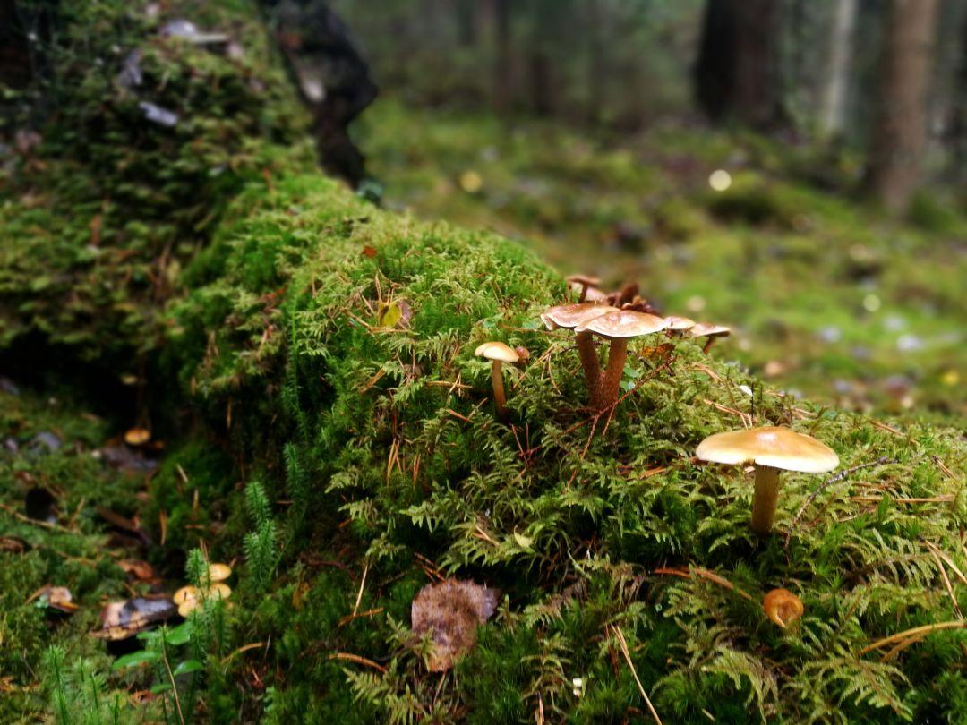 Kintulammen retkelyalue, sieniä